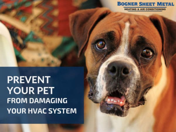 Prevent Your Pet From Damaging Your HVAC System Bogner CA